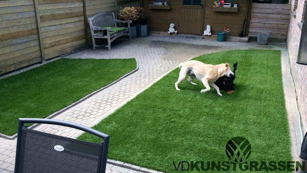 Honden spelen graag op kunstgras