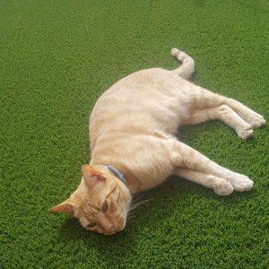 huisdieren plastic gras