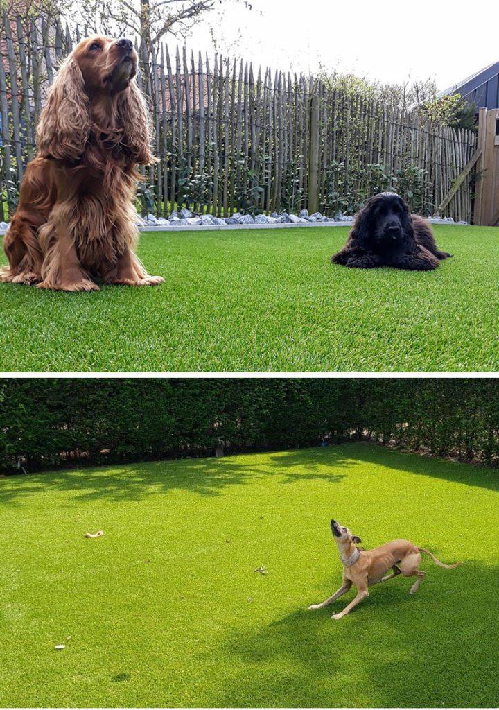 huisdieren en kunstgras