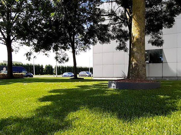Kunstgras rondom boom