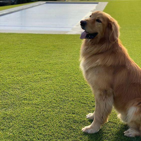 Kunstgras voor honden
